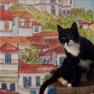 greece, cats, artists, studios