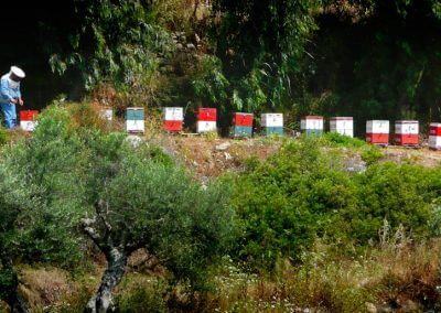 beehives beekeeper colourful greece