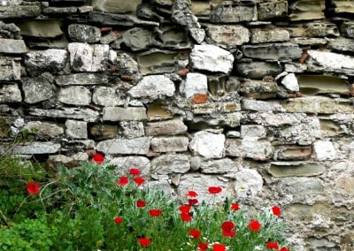 red poppies stone wall greece