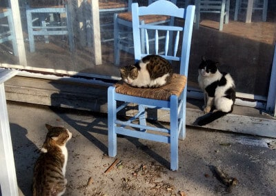 greek cats seaside taverna